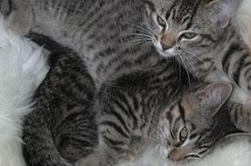 Animals, Pets, Vets